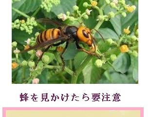横浜市青葉区の蜂駆除(スズメバチ駆除、アシナガバチ駆除)の専門業者