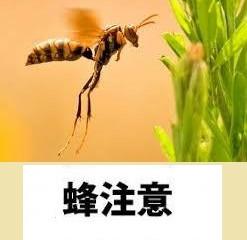 神奈川県横浜市都筑区 アシナガバチ駆除 蜂駆除 害虫害獣駆除本舗
