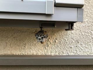 調布市のアシナガバチ駆除、蜂の巣駆除の専門業者