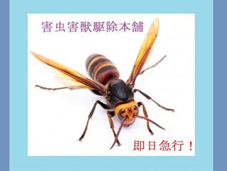 横浜市青葉区 スズメバチ駆除・巣の撤去