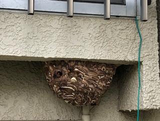 宮前区のスズメバチ駆除業者なら害虫害獣駆除本舗