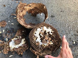 麻生区のスズメバチ駆除は害虫害獣駆除本舗へ