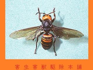 東京都稲城市のスズメバチ駆除、アシナガバチ駆除