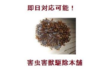 川崎市宮前区の蜂駆除(スズメバチ駆除、アシナガバチ駆除)のプロフェッショナル