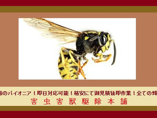 川崎市宮前区の蜂の巣駆除の専門業者