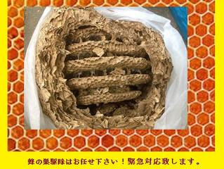 神奈川県川崎市麻生区の蜂駆除(スズメバチ駆除、アシナガバチ駆除)の専門業者