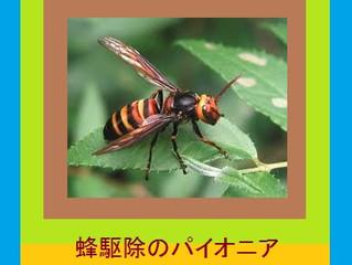 川崎市幸区のスズメバチ駆除、アシナガバチ駆除