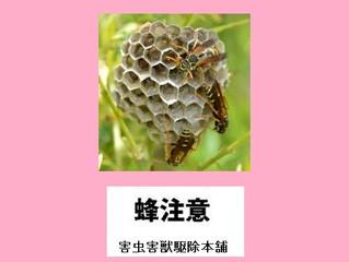 横浜市緑区のハチ駆除、蜂の巣撤去の専門業者