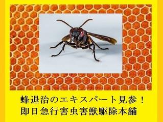 川崎市多摩区のアシナガバチ駆除(蜂駆除、蜂の巣撤去)の専門業者