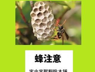 川崎市多摩区のスズメバチ駆除、アシナガ蜂駆除