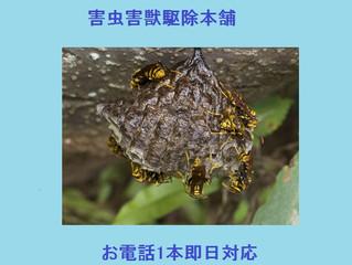 川崎市多摩区の蜂駆除(スズメバチ駆除、アシナガバチ駆除)の害虫害獣駆除本舗