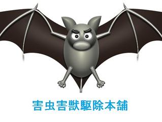 東京都大田区にて害虫害獣駆の御依頼・至急格安・当日作業・調査・相談・動物のお困りごと