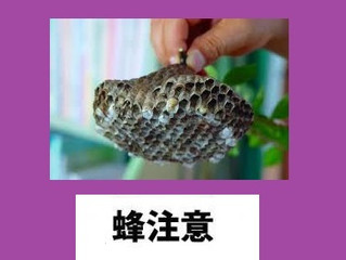 神奈川県横浜市都筑区 アシナガバチ駆除 蜂駆除 巣の撤去