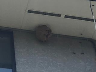 川崎市麻生区の蜂駆除、蜂の巣駆除