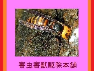 東京都稲城市のハチ駆除、ハチの巣駆除