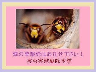 川崎市多摩区の蜂駆除(アシナガバチ駆除、ミツバチ駆除)の専門業者