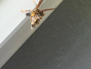 横浜市の蜂の巣駆除のプロフェッショナル 害虫害獣駆除本舗