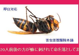 川崎市高津区の蜂駆除、蜂の巣撤去の専門業者