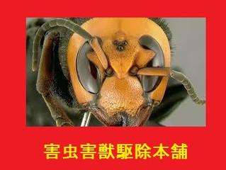 世田谷区のスズメバチ対策は害虫害獣駆除本舗・大至急対応致します。スズメ蜂アシナガ蜂