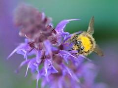 東京都稲城市の蜂駆除、蜂の巣駆除の専門業者
