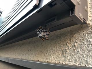 川崎市麻生区の蜂駆除、蜂の巣撤去の最安値業者