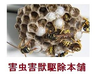 川崎市宮前区の蜂駆除(スズメバチ駆除、アシナガバチ駆除)の専門業者