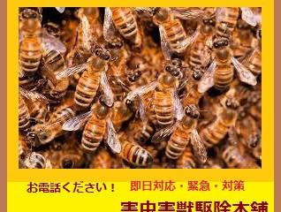 川崎市宮前区の蜂駆除(スズメバチ駆除、アシナガバチ駆除)