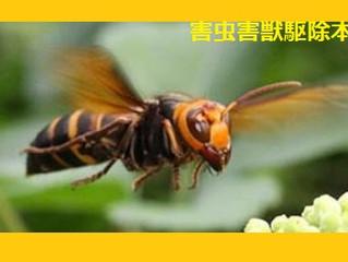 神奈川県川崎市多摩区の蜂駆除蜂の巣撤去専門業者