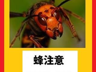 川崎市麻生区の蜂駆除は害虫害獣駆除本舗にお任せください。