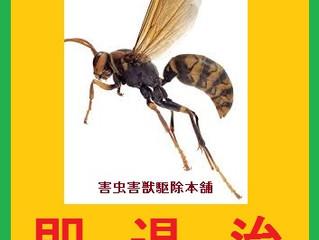 横浜市都筑区の蜂駆除(スズメバチ駆除、アシナガバチ駆除)専門業者