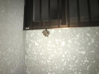 川崎市多摩区の蜂駆除(スズメバチ駆除、アシナガ蜂駆除、ミツバチ駆除)