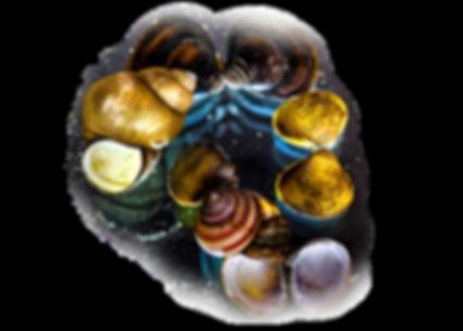 Shell-Galaxy_Galaxia-scoicilor_1_x_edite