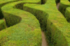 Privacy hedges as a graffiti deterrent.