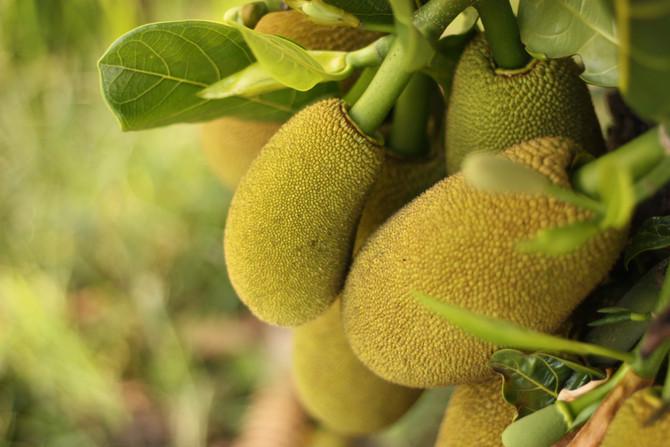 recette: 'carbonades' au ... jackfruit!
