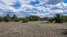 Easy Access, Private 1.16 Acres near Show Low, AZ - Lot #207