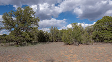SOLD! Quick Access, Private 1.11 Acres near Williams & Grand Canyon - Lot #009