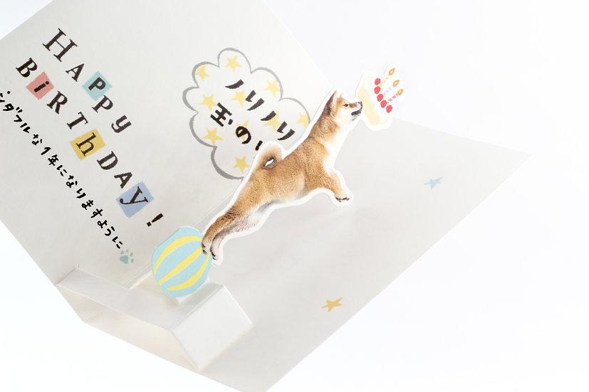 Pop-up Birthday Card - Shibainu