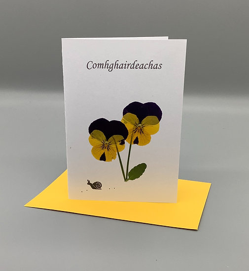Comhghairdeachas - Yellow and purple pansy