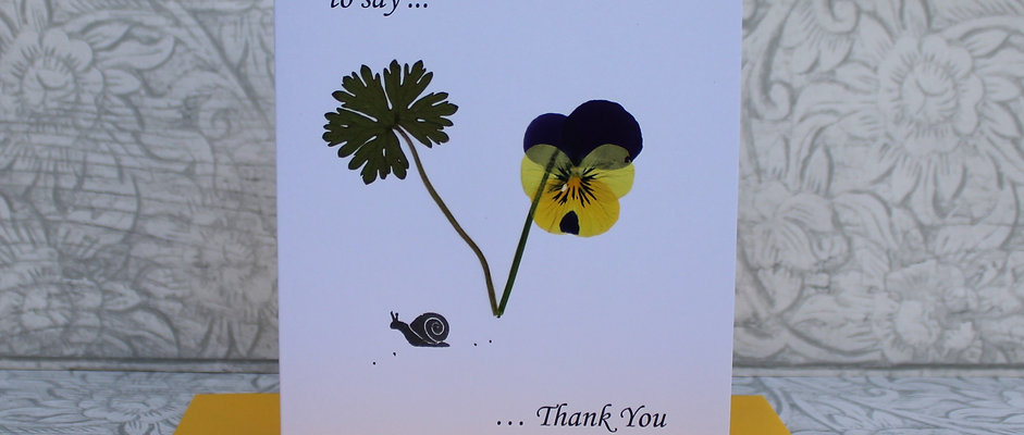 Thank You - Pansy