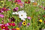 flower-meadow-3598562_1280.jpg