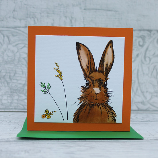 Woodland Hare