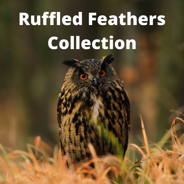 Ruffled Feathers Collection