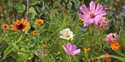 wild-flowers-3592934_1920.jpg