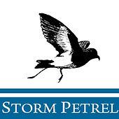 Storm Petrel.jpg