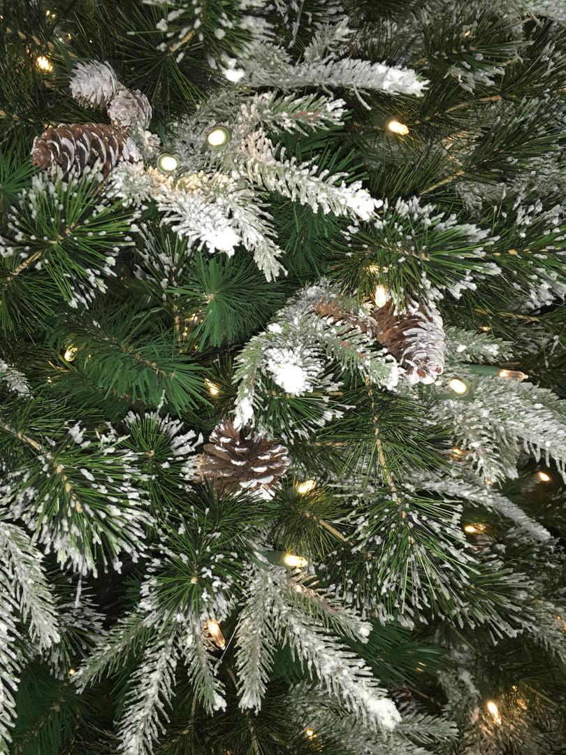 Snowy Liberty Pine.JPG