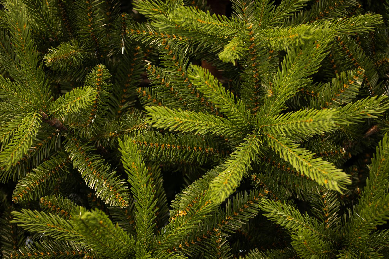 Topeka Spruce 1.tif