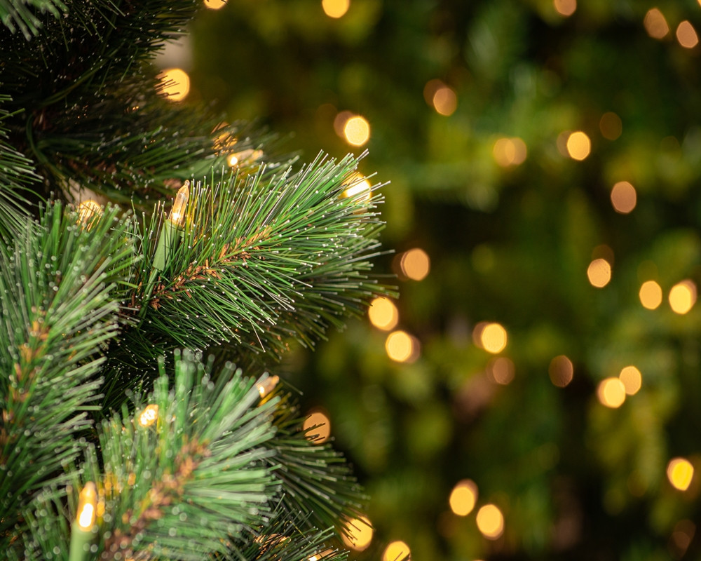 Frosted Ontario Green Pine 2.jpg