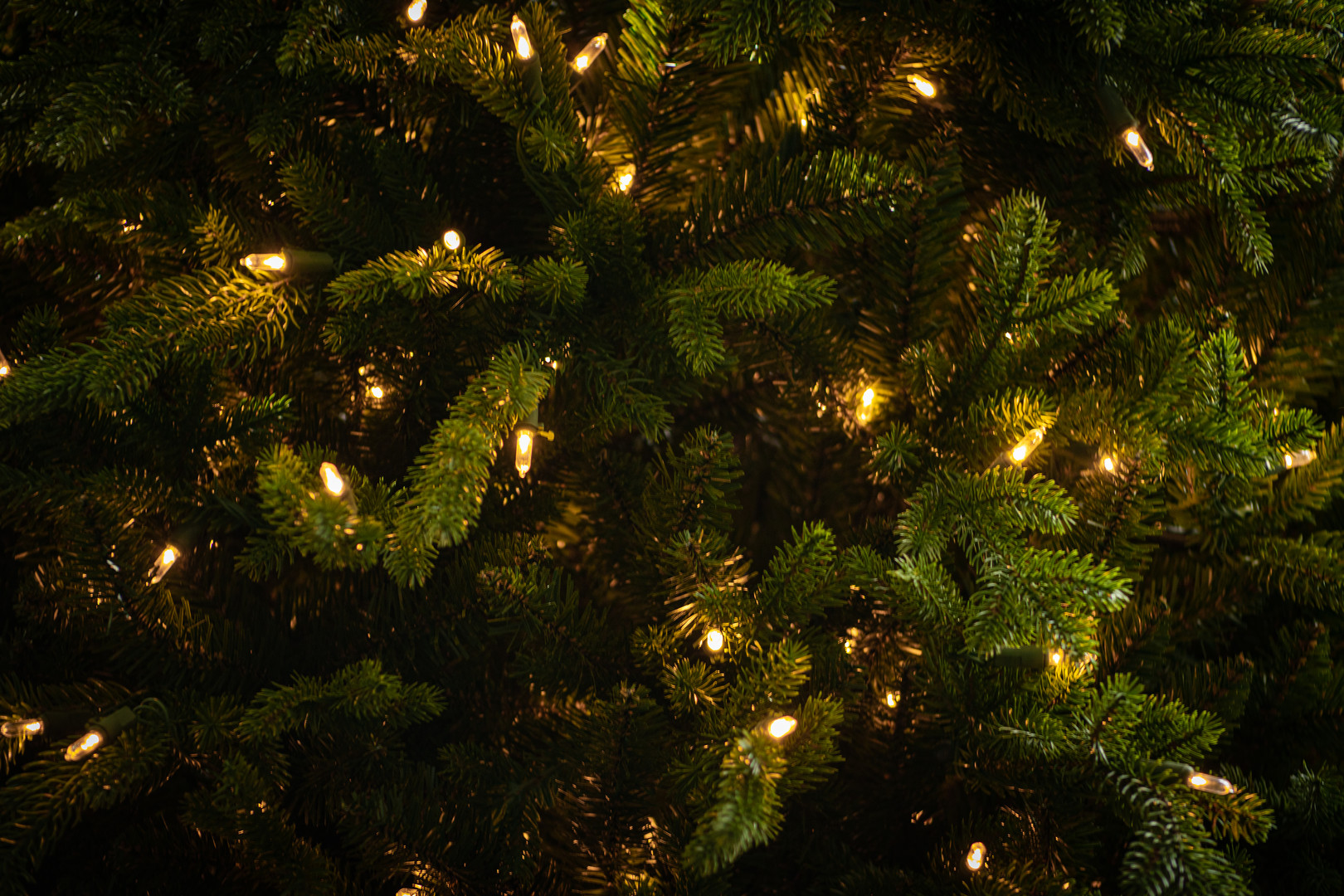 Buckingham Spruce Tree 1.jpg