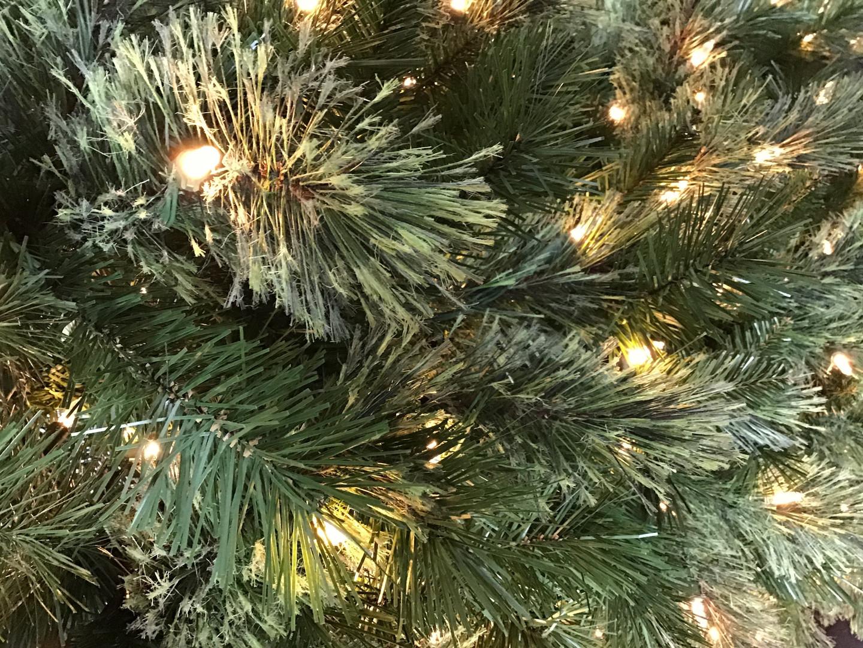 Tacoma Pine.jpg