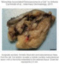 Website Cat implant.JPG